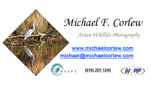 Michael F. Corlew, Avian-Wildlife Photography