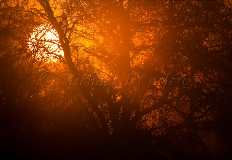 Sunrise in Fog (Cosumnes River Preserve) 82