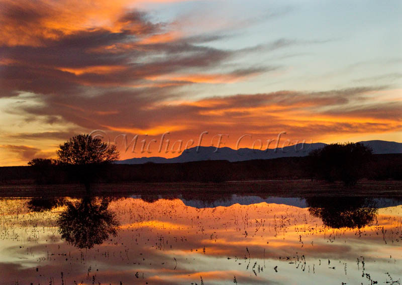 After Sunset at Bosque del Apache NWA 164