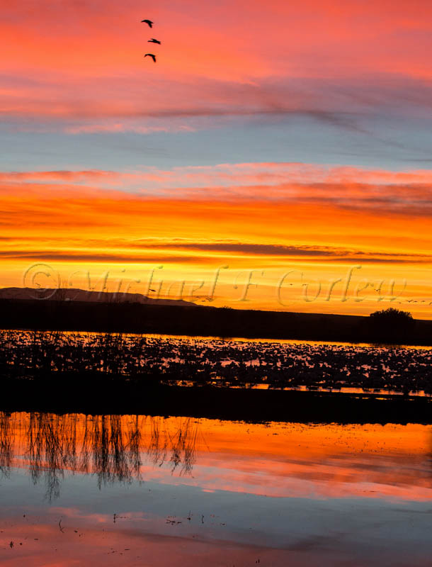 Sunrise Bosque del Apache NWA 70